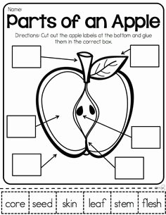 Parts Of An Apple Worksheet Luxury Sequencing E Little Mouse