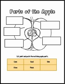 Parts Of An Apple Worksheet Unique Free Printable – Apple Of God's Eye