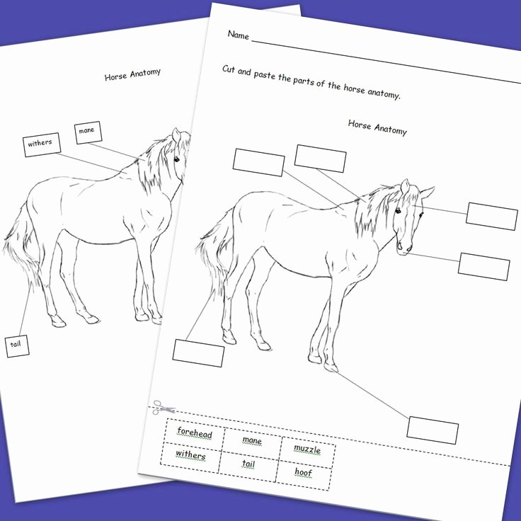 Parts Of the Horse Worksheet Awesome 63 Best Images About Pony Camp Worksheets On Pinterest
