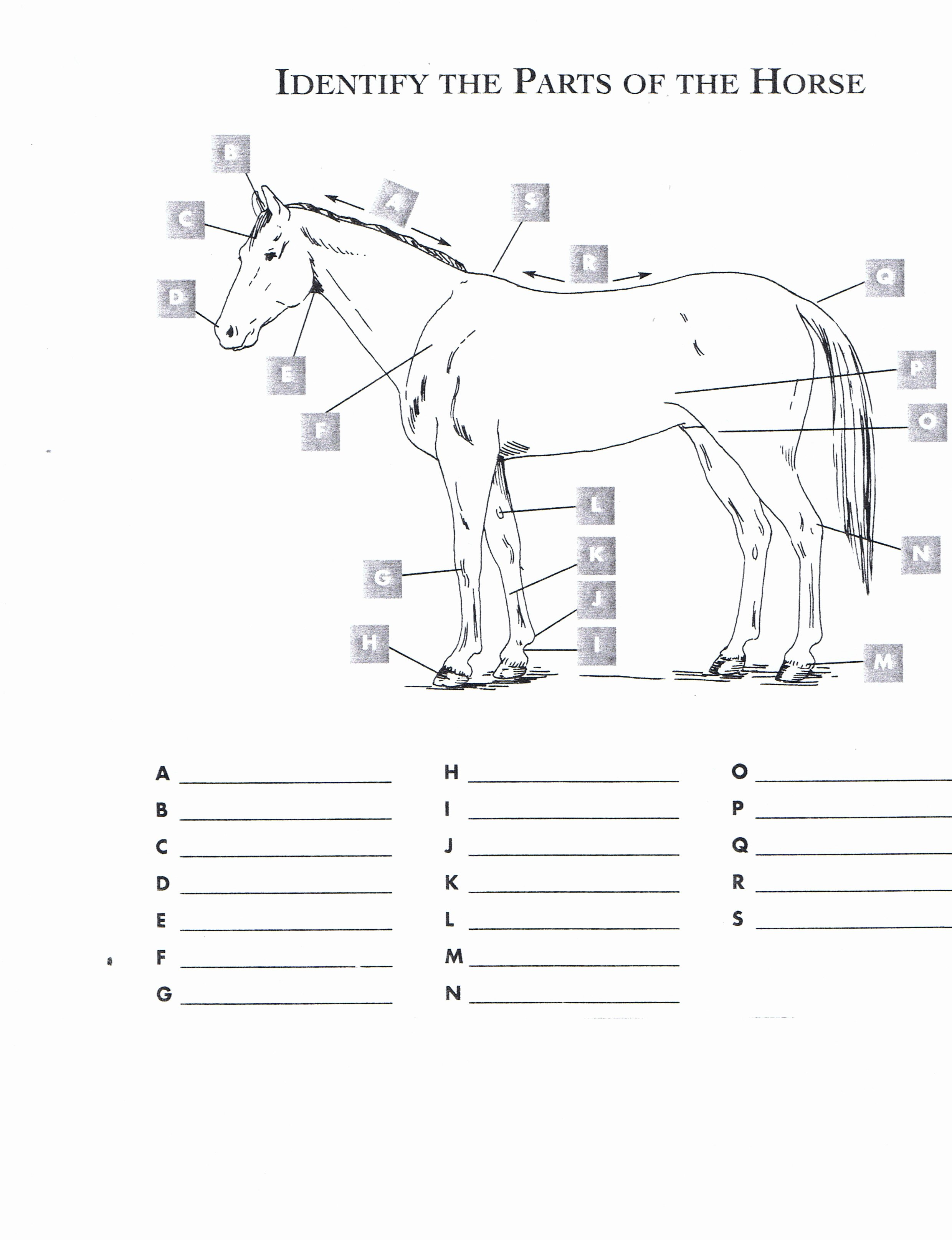 Parts Of the Horse Worksheet Best Of Red Oak Riders
