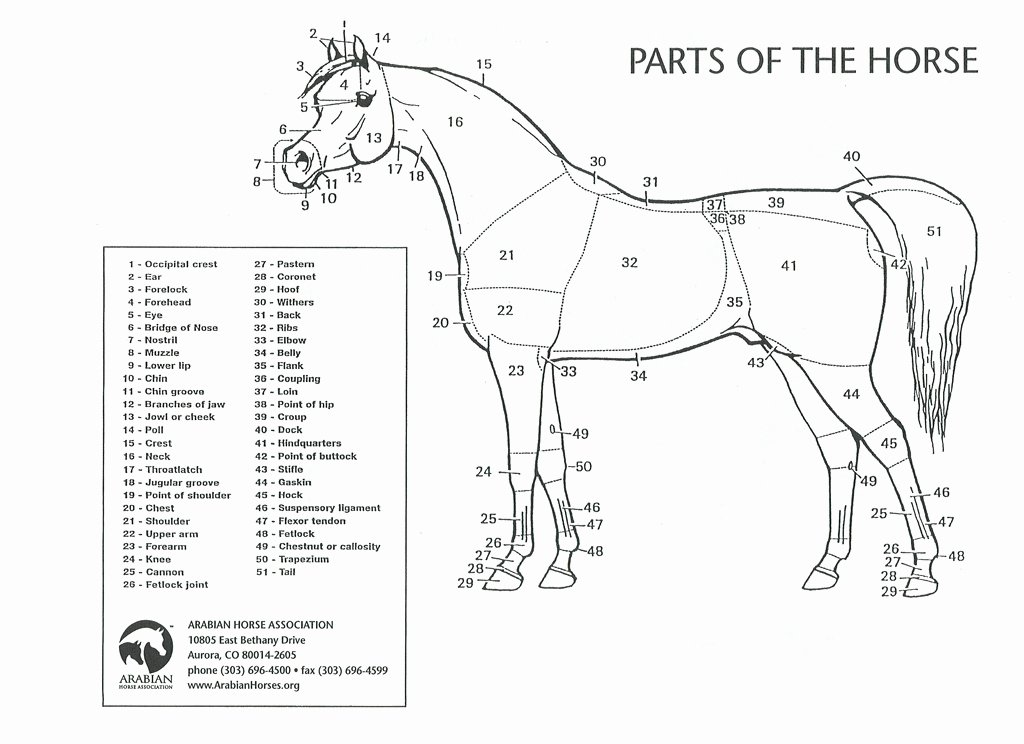 Parts Of the Horse Worksheet Fresh Kids Only