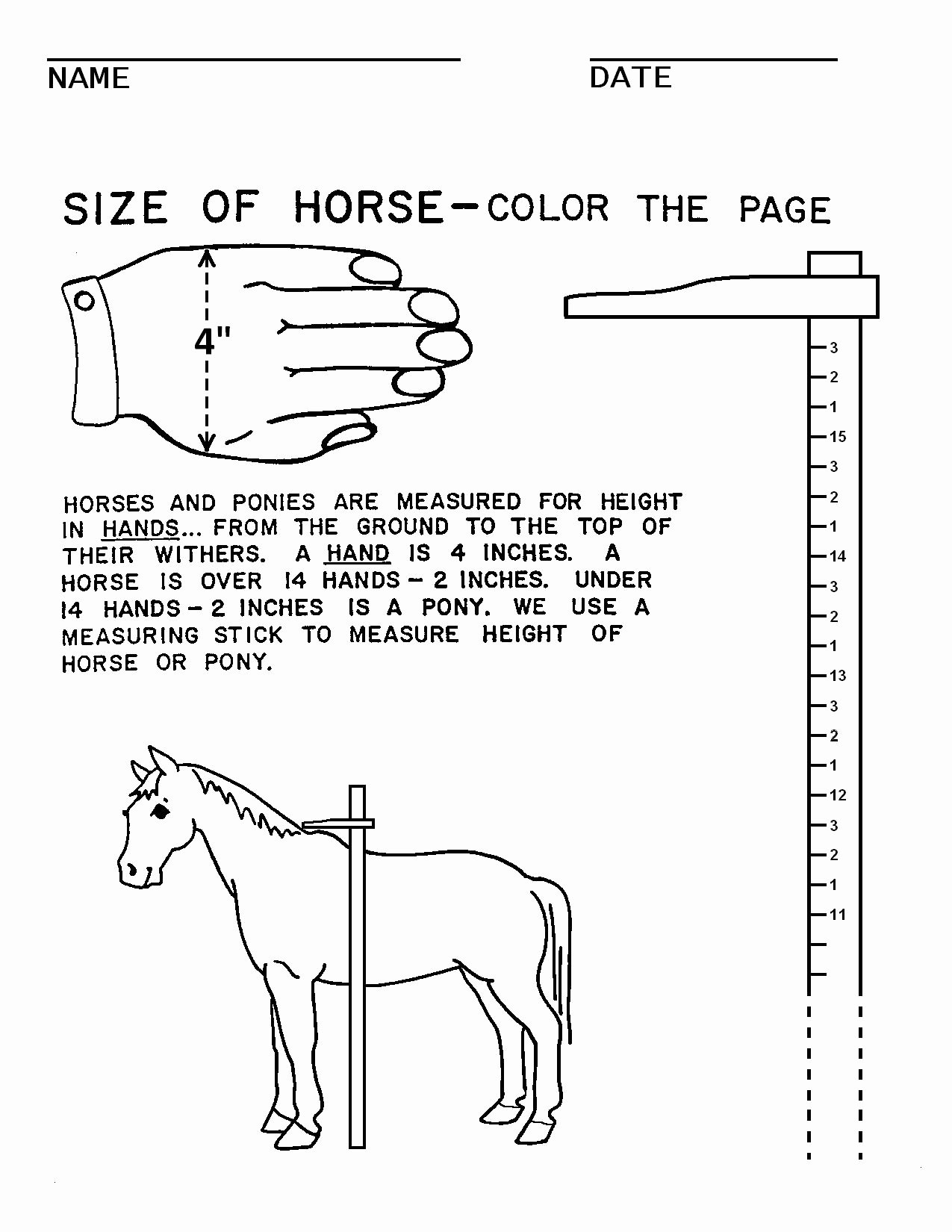 Parts Of the Horse Worksheet New 17 Best Of Saddle Worksheets Printable Part