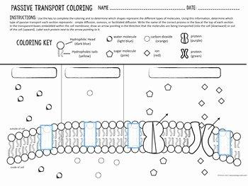 Passive and Active Transport Worksheet Elegant Cell Transport Passive Transport Coloring by Biology