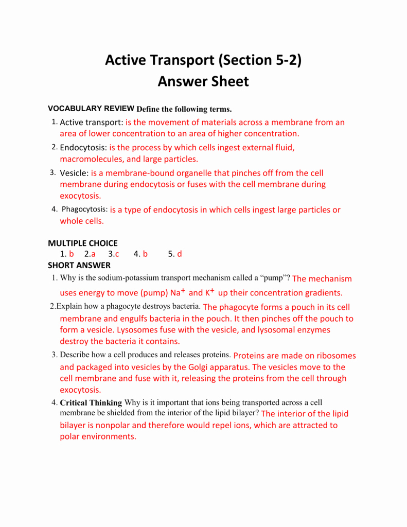 Passive and Active Transport Worksheet Fresh Active Transport Section 5 2 Answer Sheet