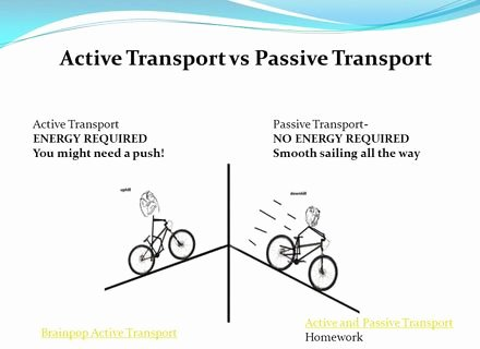Passive and Active Transport Worksheet New Diffusion Osmosis and Active Transport Worksheetpdf