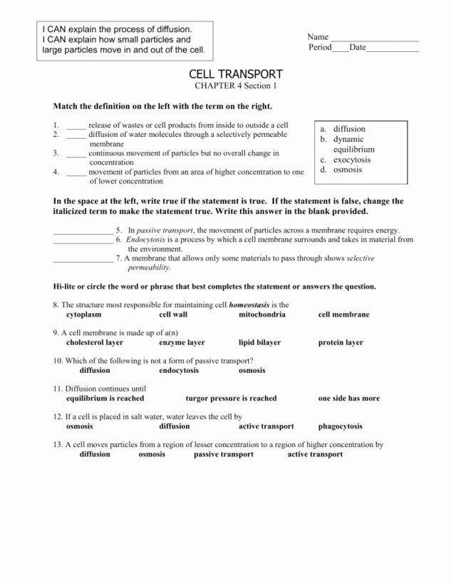 Passive and Active Transport Worksheet Unique Passive Transport Worksheet Answers