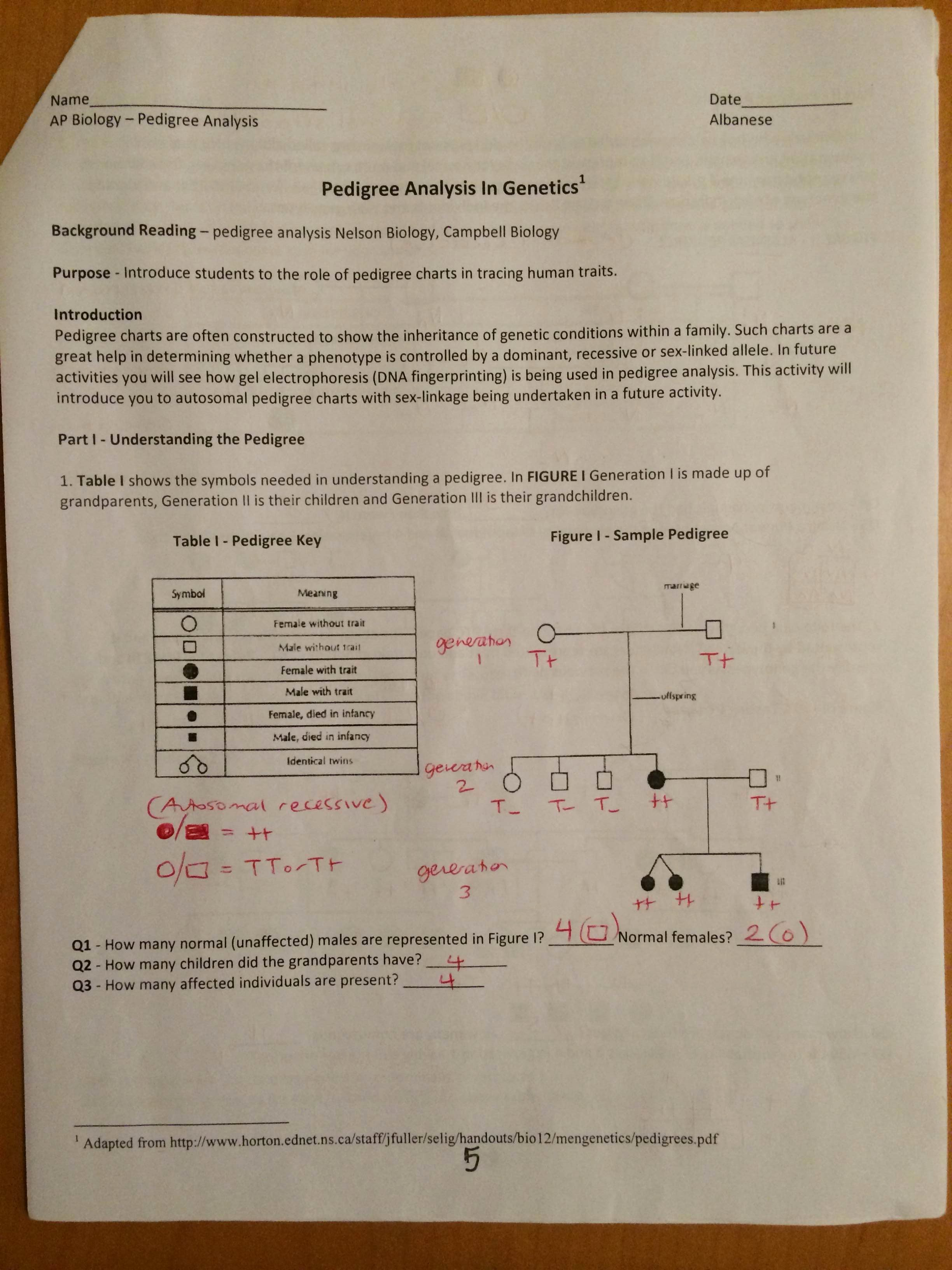 Pedigree Worksheet Answer Key Best Of Key Pedigree Analysis Worksheet Mrs Paulik S Website