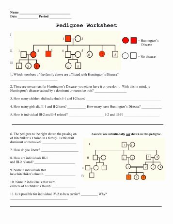 Pedigree Worksheet Answer Key Luxury Pedigree Worksheet â Day 3