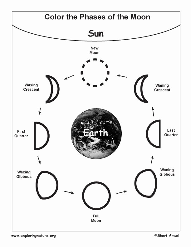 Phases Of the Moon Worksheet Elegant Moon Phases Coloring