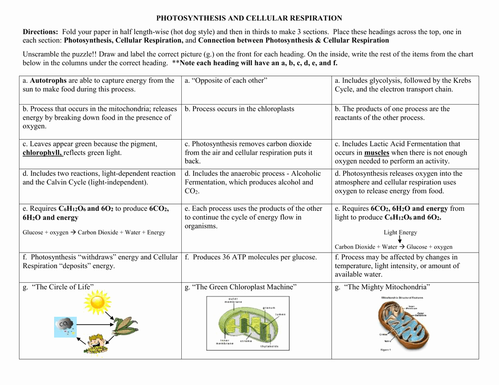 Photosynthesis and Cellular Respiration Worksheet Awesome Printables Of Synthesis and Cellular Respiration