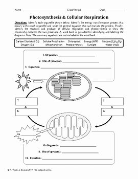 Photosynthesis and Cellular Respiration Worksheet Awesome Synthesis and Cellular Respiration Worksheet by A