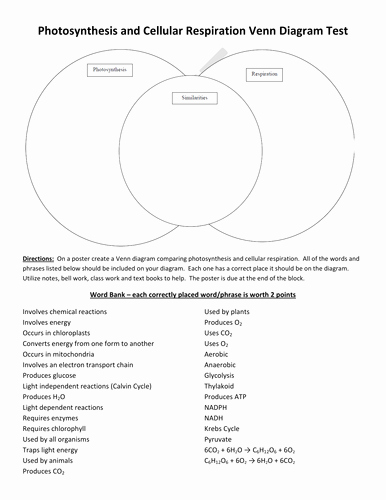 Photosynthesis and Cellular Respiration Worksheet Elegant Synthesis & Cellular Respiration Venn Diagram by