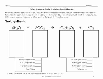 Photosynthesis and Cellular Respiration Worksheet Elegant Synthesis and Cellular Respiration Chemical formula