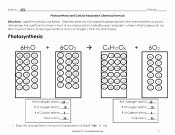 Photosynthesis and Cellular Respiration Worksheet Lovely Synthesis and Cellular Respiration Chemical formula