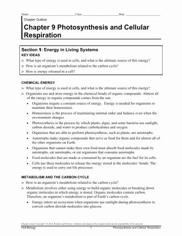 Photosynthesis and Cellular Respiration Worksheet Unique Cellular Respiration and Synthesis Worksheet