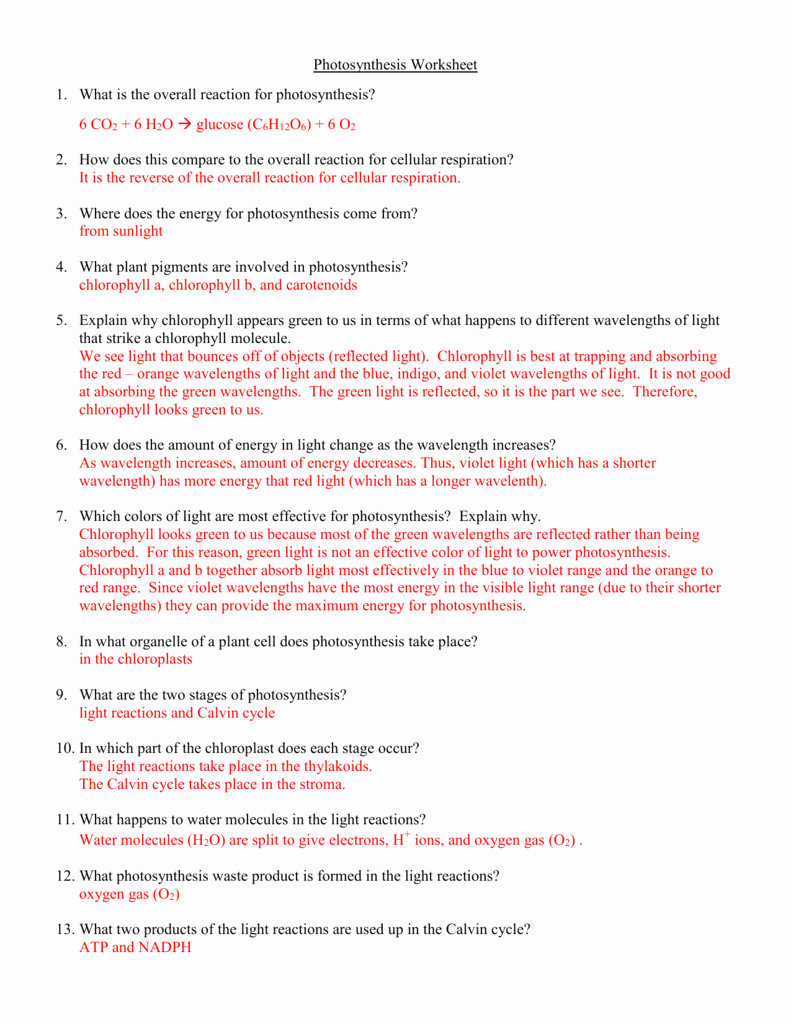 Photosynthesis and Respiration Worksheet Answers Awesome Synthesis Worksheet