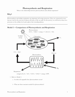 Photosynthesis and Respiration Worksheet Answers Lovely 7 Classification Of Matter S