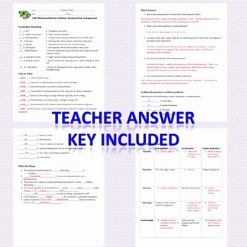 Photosynthesis and Respiration Worksheet Answers New atp Synthesis & Cellular Respiration Study Guide or