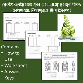 Photosynthesis and Respiration Worksheet Answers Unique Synthesis and Cellular Respiration Chemical formula