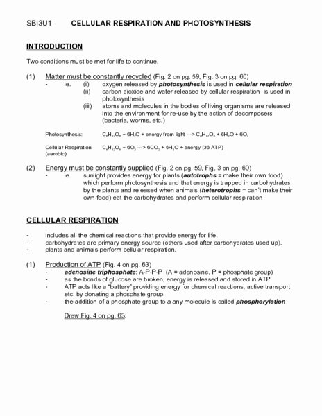 Photosynthesis and Respiration Worksheet Beautiful Cellular Respiration and Synthesis Worksheet for 9th