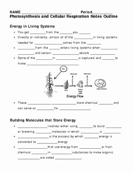 Photosynthesis and Respiration Worksheet Fresh Synthesis and Cellular Respiration Notes Outline