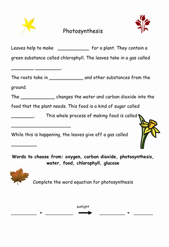 Photosynthesis and Respiration Worksheet Lovely Synthesis by Geminiwhizz