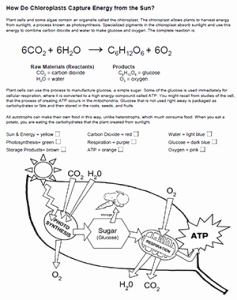Photosynthesis and Respiration Worksheet Luxury Synthesis Coloring