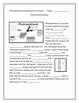 Photosynthesis and Respiration Worksheet New Annette Hoover Teaching Resources