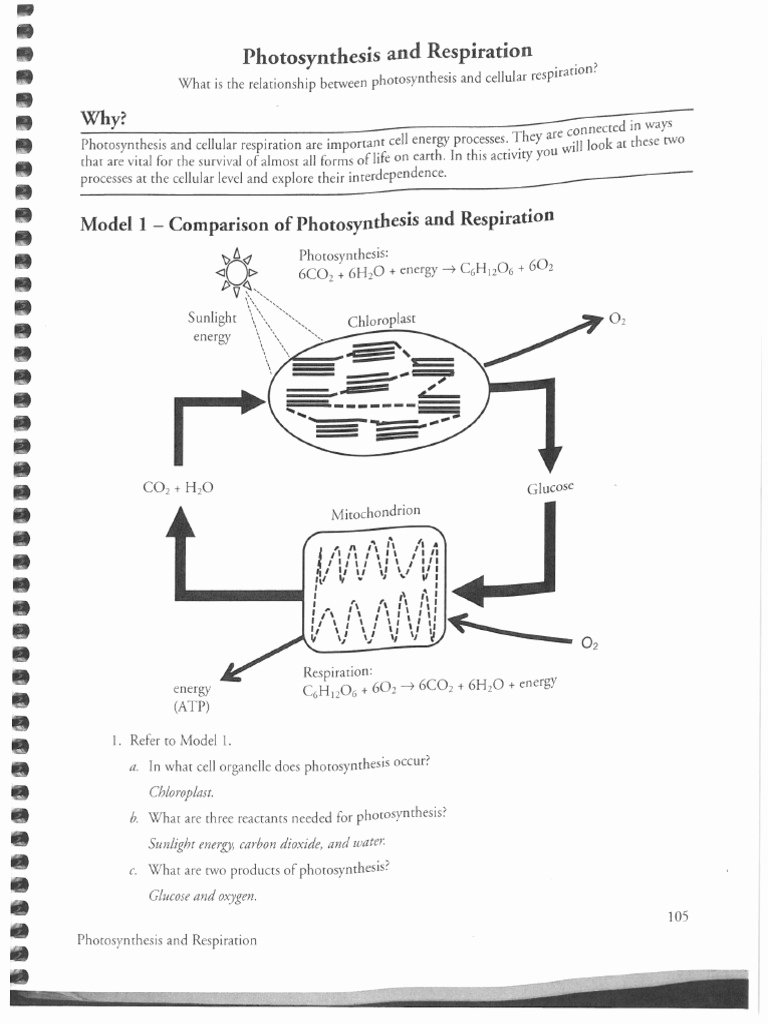 Photosynthesis and Respiration Worksheet New Cracking the Periodic Table Code Worksheet Answers