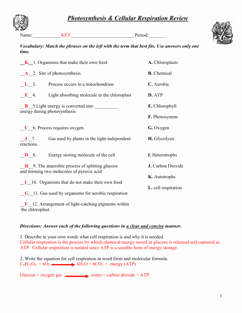 Photosynthesis and Respiration Worksheet Unique Synthesis & Cellular Respiration Worksheet