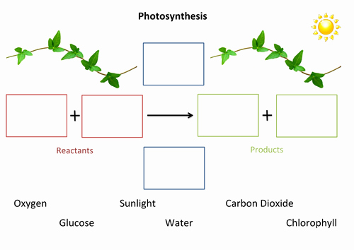 Photosynthesis Diagrams Worksheet Answers Elegant Synthesis Fill In the Gaps by Susiejay