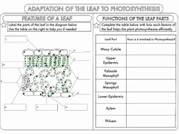 Photosynthesis Diagrams Worksheet Answers Inspirational Gcse Synthesis topic Worksheets by Beckystoke