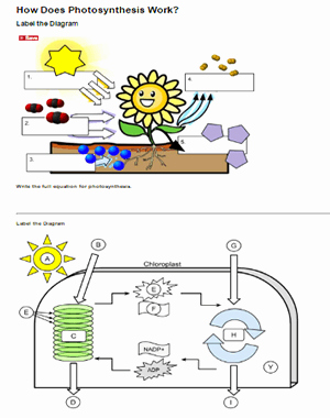 Photosynthesis Diagrams Worksheet Answers Inspirational How Does Synthesis Work