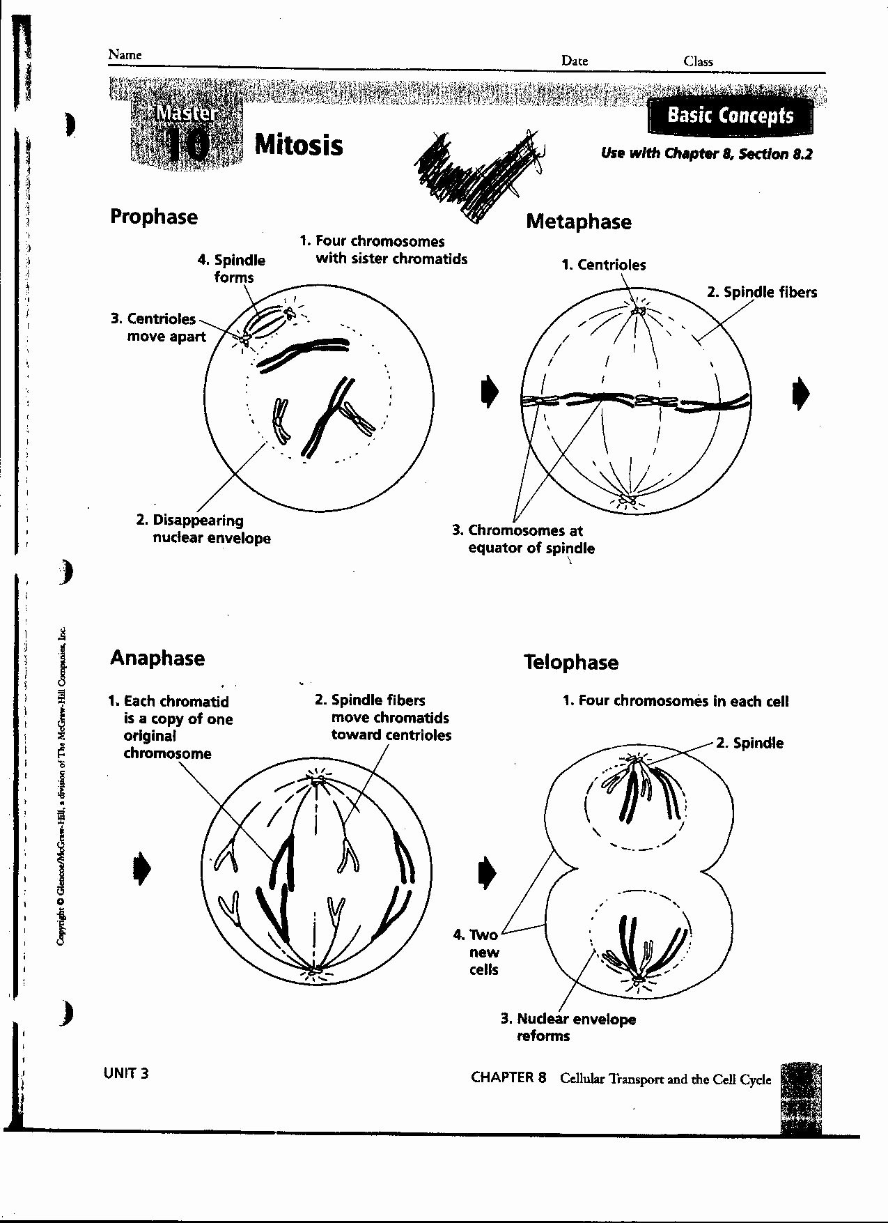 Photosynthesis Diagrams Worksheet Answers Lovely 14 Best Of Synthesis Worksheets with Answer