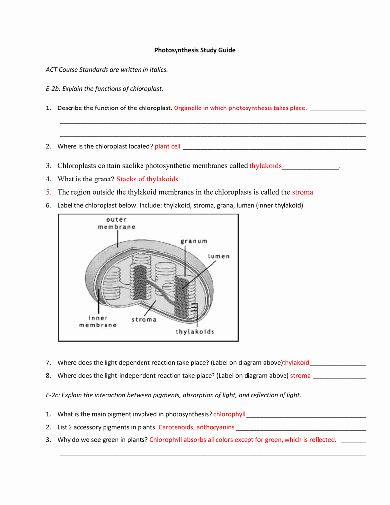 Photosynthesis Diagrams Worksheet Answers Lovely Synthesis Study Guide Answer Key