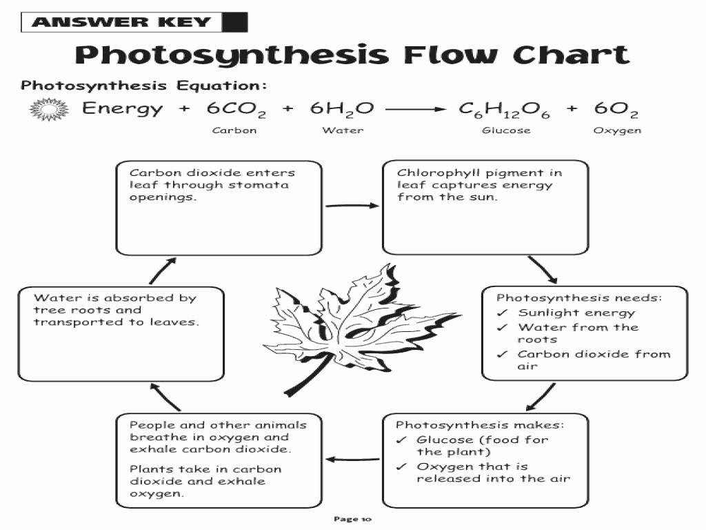 Photosynthesis Diagrams Worksheet Answers Luxury Synthesis Diagrams Worksheet Answer Key the Best