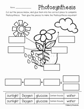 Photosynthesis Worksheet Answer Key Awesome Synthesis Poster Classroom Display and Worksheet by