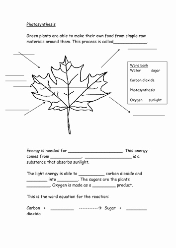 Photosynthesis Worksheet Answer Key Beautiful Synthesis Worksheet by Hazcard