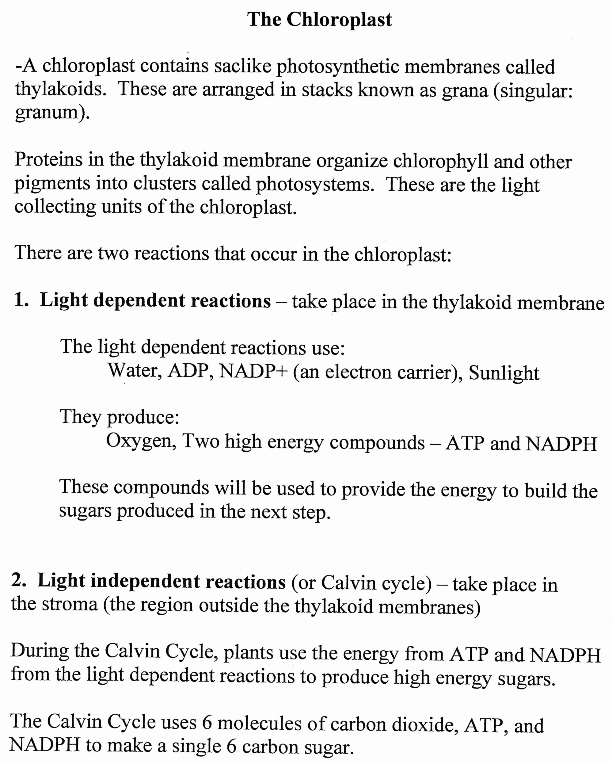 Photosynthesis Worksheet High School Lovely Biology Coursework Photosynthesis Myteacherpages X Fc2