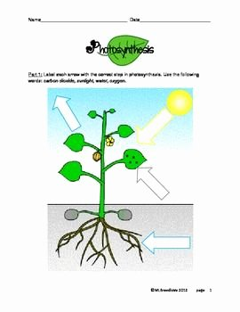 Photosynthesis Worksheet High School Lovely Photosynthesis Activity Pages 5th Grade Google Search