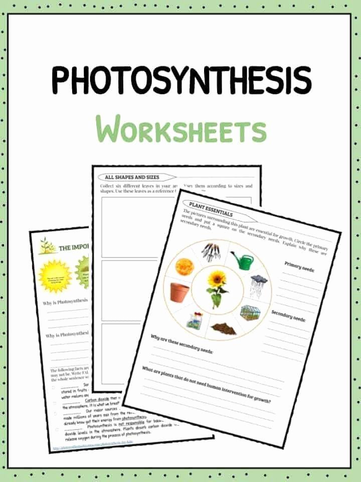 Photosynthesis Worksheet High School New Synthesis Facts Information & Worksheets for Kids