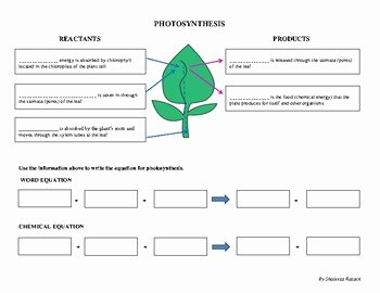 Photosynthesis Worksheet High School Unique Photosynthesis Worksheet Sc 912 L 18 7 & Sc 912 L 18 9
