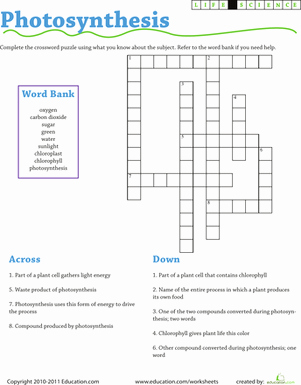 Photosynthesis Worksheet Middle School Awesome Life Science Crossword Synthesis