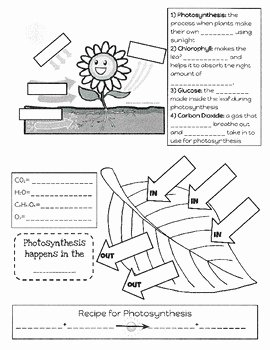 Photosynthesis Worksheet Middle School Awesome Synthesis Foldable by Heather Morrison