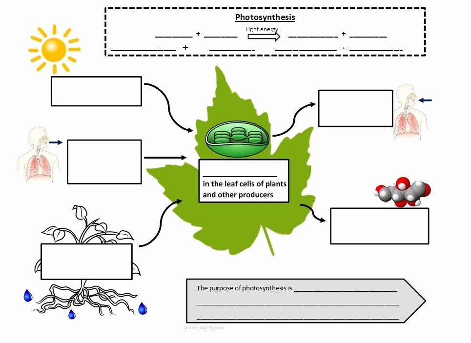 Photosynthesis Worksheet Middle School Beautiful Synthesis and Cellular Respiration Graphic Notes