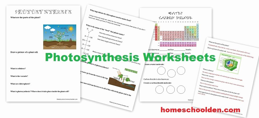 Photosynthesis Worksheet Middle School Best Of Free Synthesis Worksheets