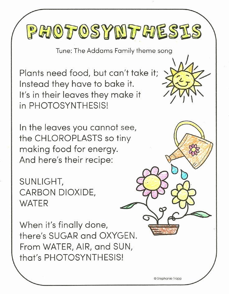 Photosynthesis Worksheet Middle School Best Of Synthesis for Kids Primary theme Park