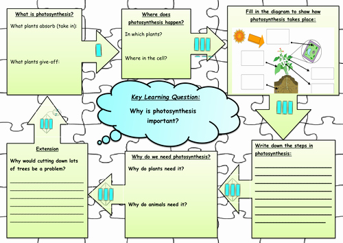 Photosynthesis Worksheet Middle School Elegant Synthesis Jigsaw Worksheet by Annabelbianca