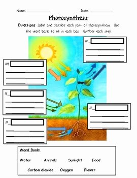 Photosynthesis Worksheet Middle School Fresh Synthesis 3rd Grade by Jennifer Caine