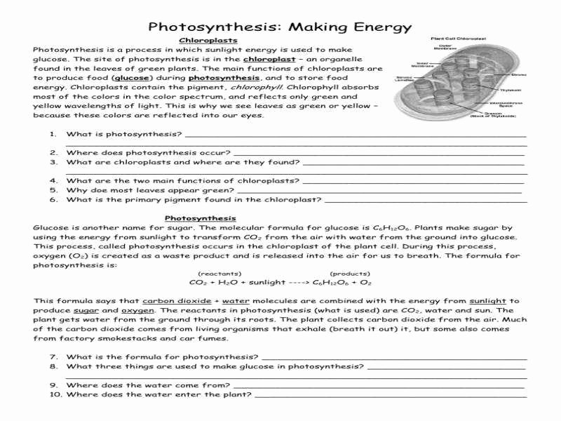 Photosynthesis Worksheet Middle School Inspirational Synthesis Worksheet